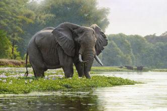 Zambezi Morning