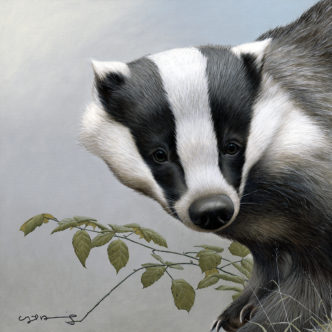 Badger (British Wildlife Series)