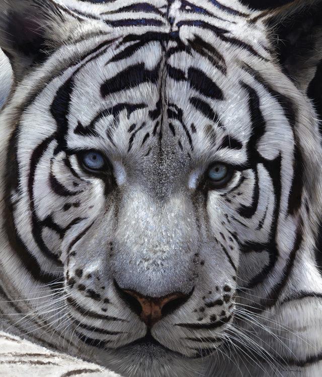 White Tiger (Canvas on Board Edition)