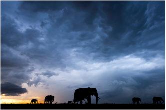 Stormy Skies over the Massai Mara