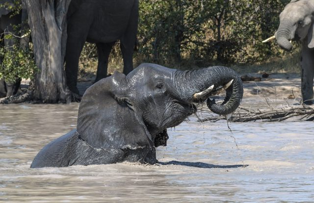 Bath Time by Fiona Haddon Elephant Photography