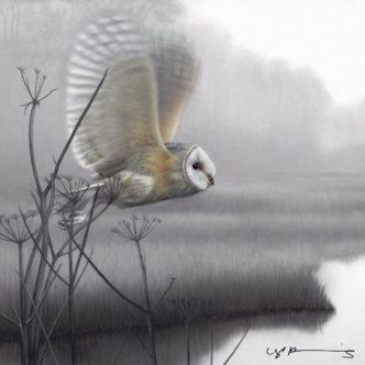 Owl Taking Flight by Nigel Hemming