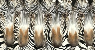 First To Blink Loses by Dominique Salm Zebra print fine art