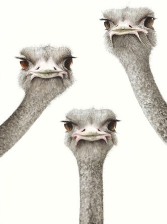 First To Blink Loses by Dominique Salm Ostrich print fine art