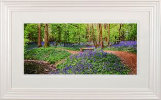 Bluebell Haven Framed Pint by Paul Haddon Photography