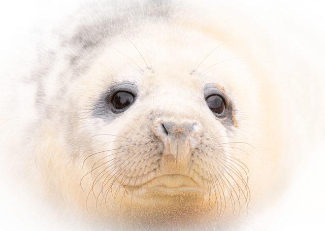 Chris Weston Puppy Eye