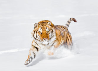Chris Weston Snowbound