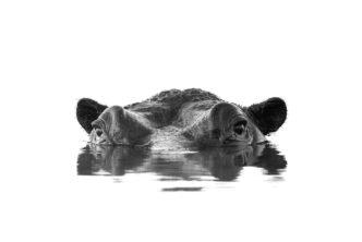 Chris Weston What Lies Beneath